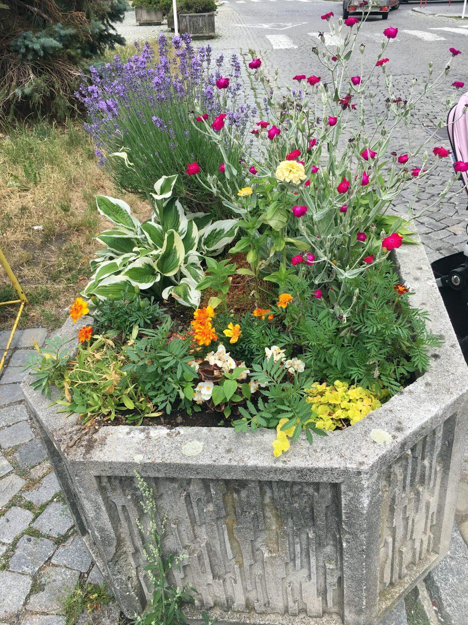zahradka05